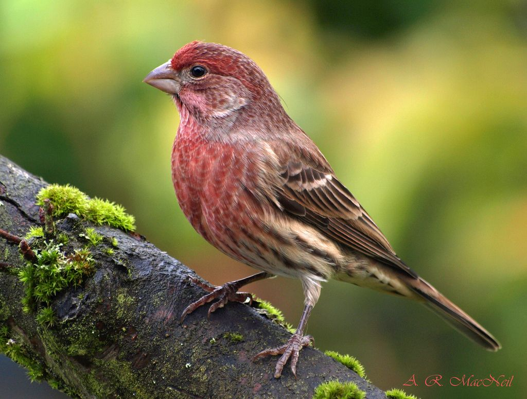 pin by amy adkins on birds we u0027ve seen in the backyard pinterest