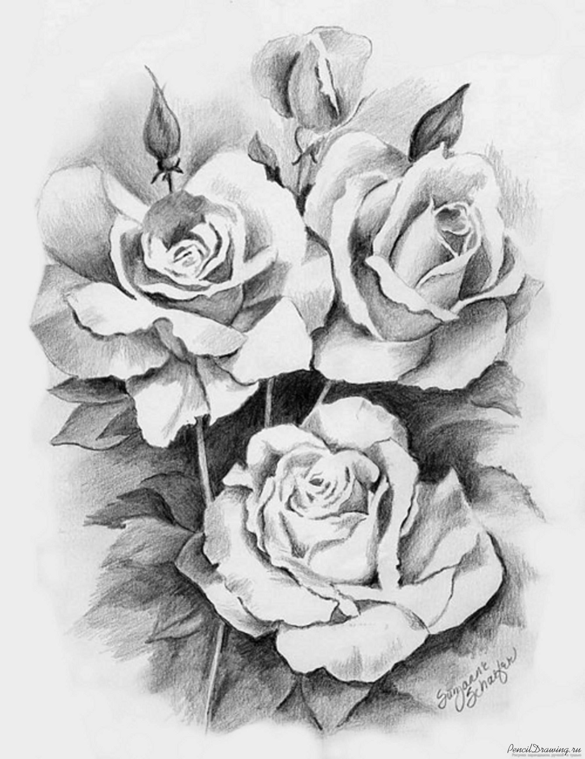розы фото нарисованные