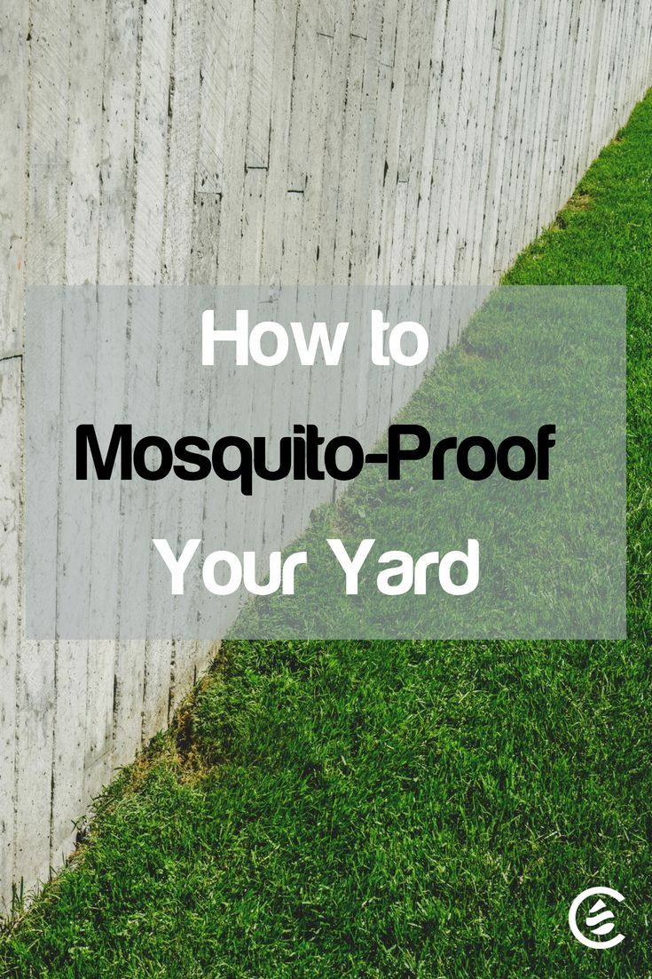 How to mosquitoproof your yard cedarcide in 2020