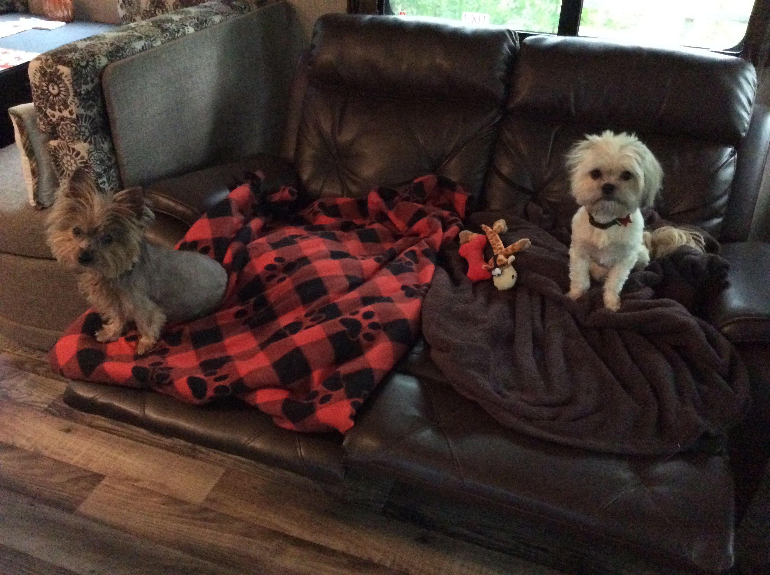 Daisy Our Yorkie And Lily The Shichi Love To Camp Too Yorkie Rv Life Laundry Clothes