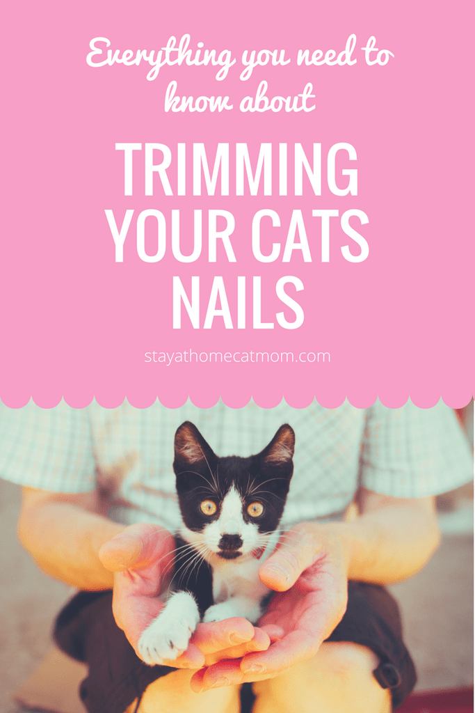 How To Trim A Cats Claws Cat Care Cat Claws Kitten Grooming