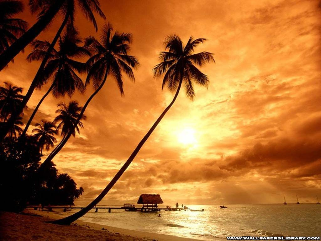 Tropical Beach Paradise Sunset Hd P  Hd Wallpapers