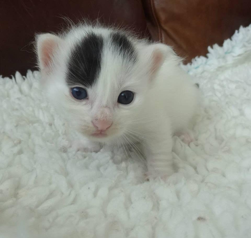 CUCCIOLO a little mini kitten nel 2020 Cuccioli