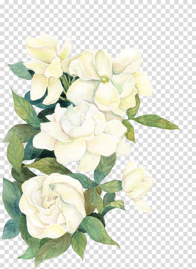 Olepeci Hapecipab Adli Kullanicinin White Flower Panosundaki Pin Estetik