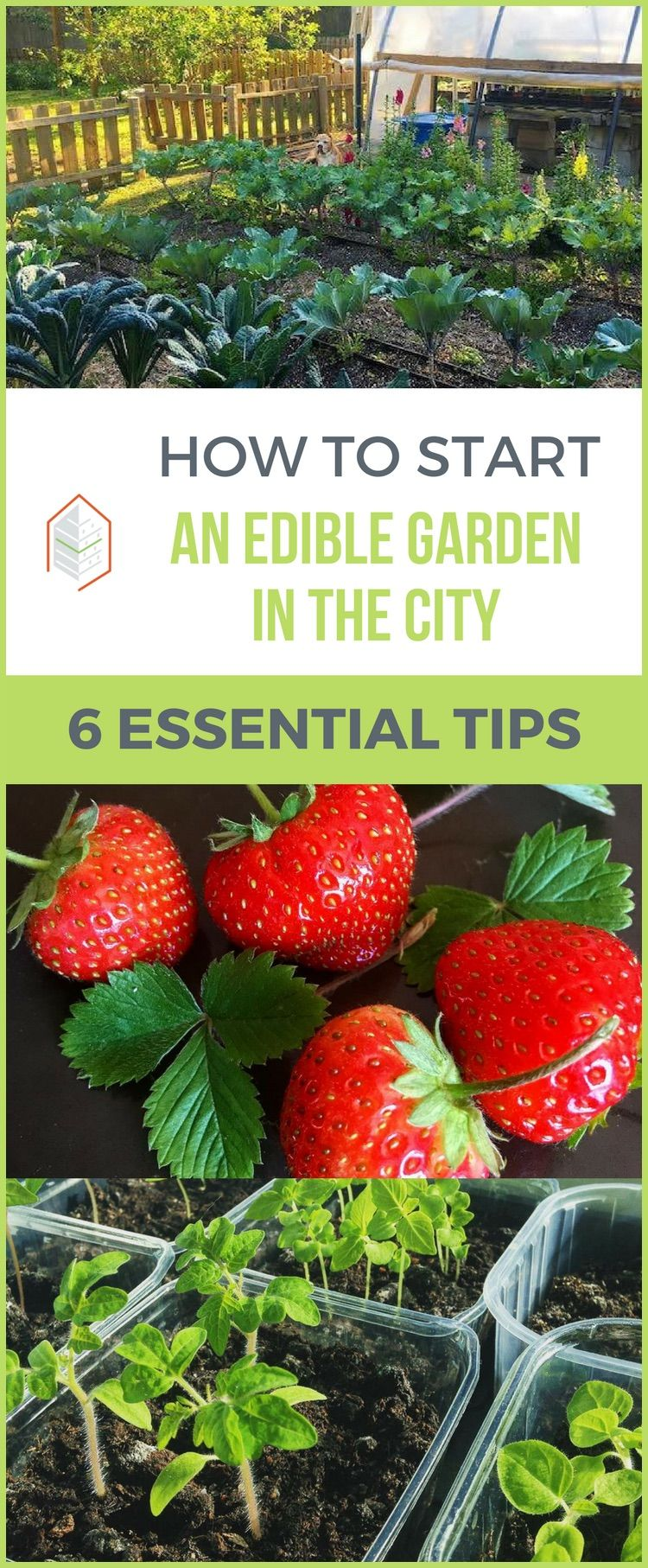 Marvelous Do You Want To Know How To Start An Edible Garden? Hereu0027s How. Learn