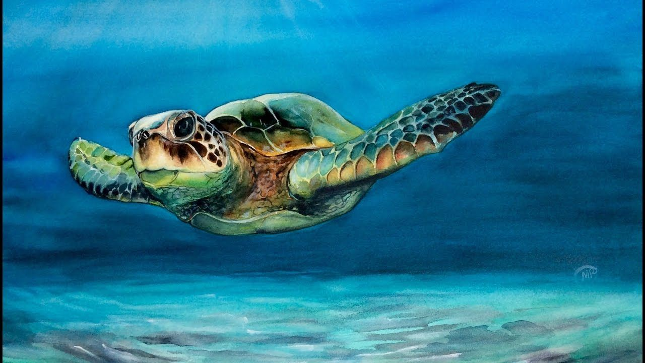Watercolor Sea Turtle Painting Demonstration Youtube Sea