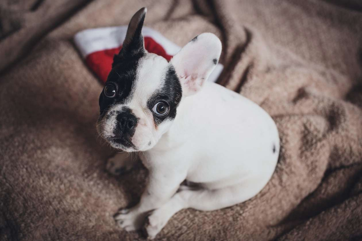 Cute Dogs A Lot Of People Feel That Dog Training Is Quiet Difficult Quite A Few Additionally Believe That A Number O Training Your Dog Puppy Training Puppies
