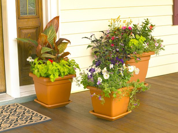 How to design a container garden -- thriller--filler--spiller