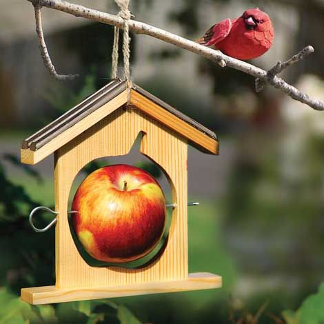 Wooden Apple House Feeder Its Cute But The Apple Just Hanging Out