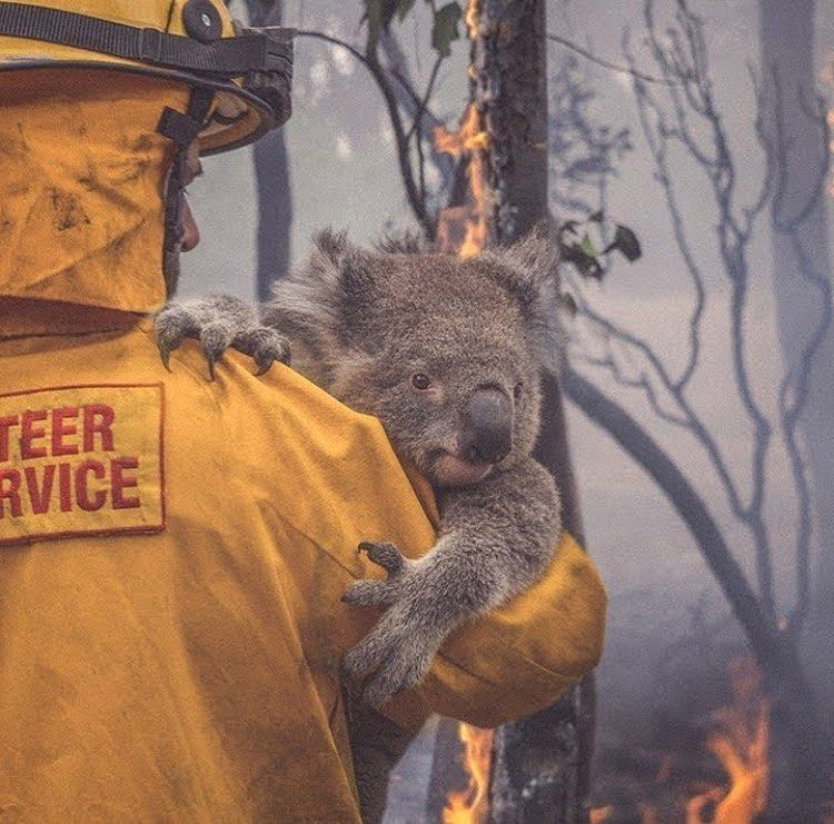 Our Planet Daily On Instagram Firefighters Are Real Heroes