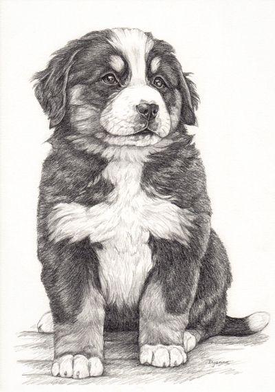 Illustratie Berner Sennen Pup Bernese Mountain Dog Tekening Van