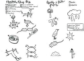 Characteristics of Life coloring sheet abiotic biotic