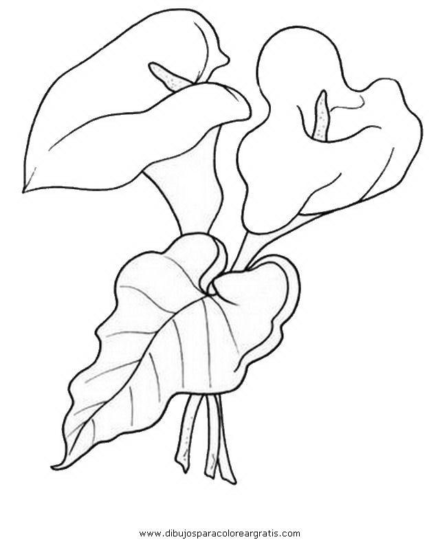 colibri picaflor dibujo - Buscar con Google | flores para pintar ...