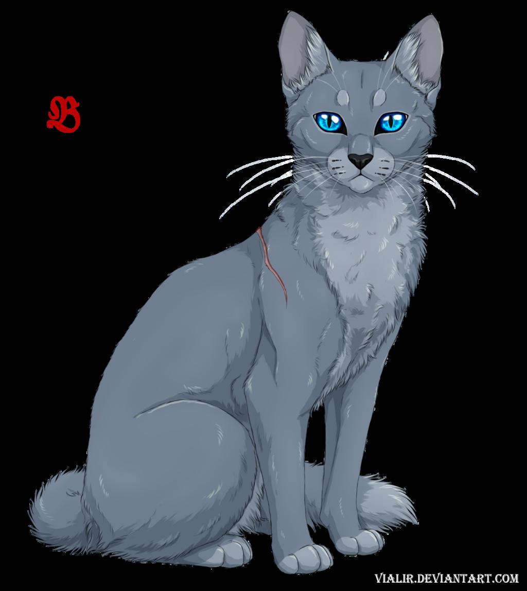Bluestar by Vialir on DeviantArt Warrior cats fan art