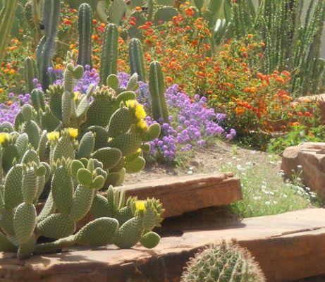 Visit the Ethel M Botanical Cactus Garden Vegas trip