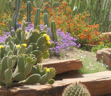 Visit The Ethel M Botanical Cactus Garden