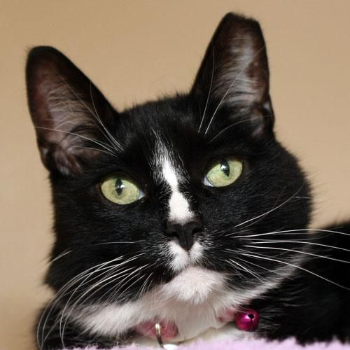 Adopt CYPRESS on (With images) Animal help, Short hair