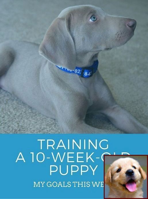 House Training A Puppy With No Garden And How Much Do Dog