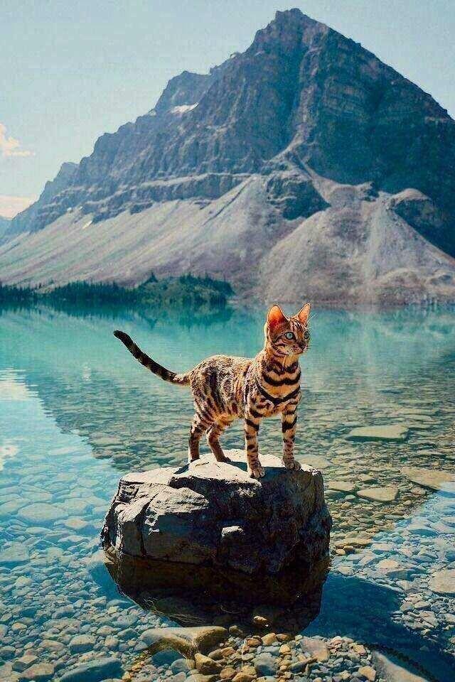 Suki Katze Ich Folge Suki Auf Instagram Immer So Schone Fotos Susse Tiere Bilder Susse Tiere Tiere