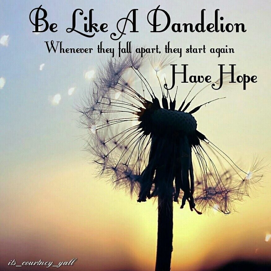 I Love This Flower Quotes Love Dandelion Quotes Flower Quotes