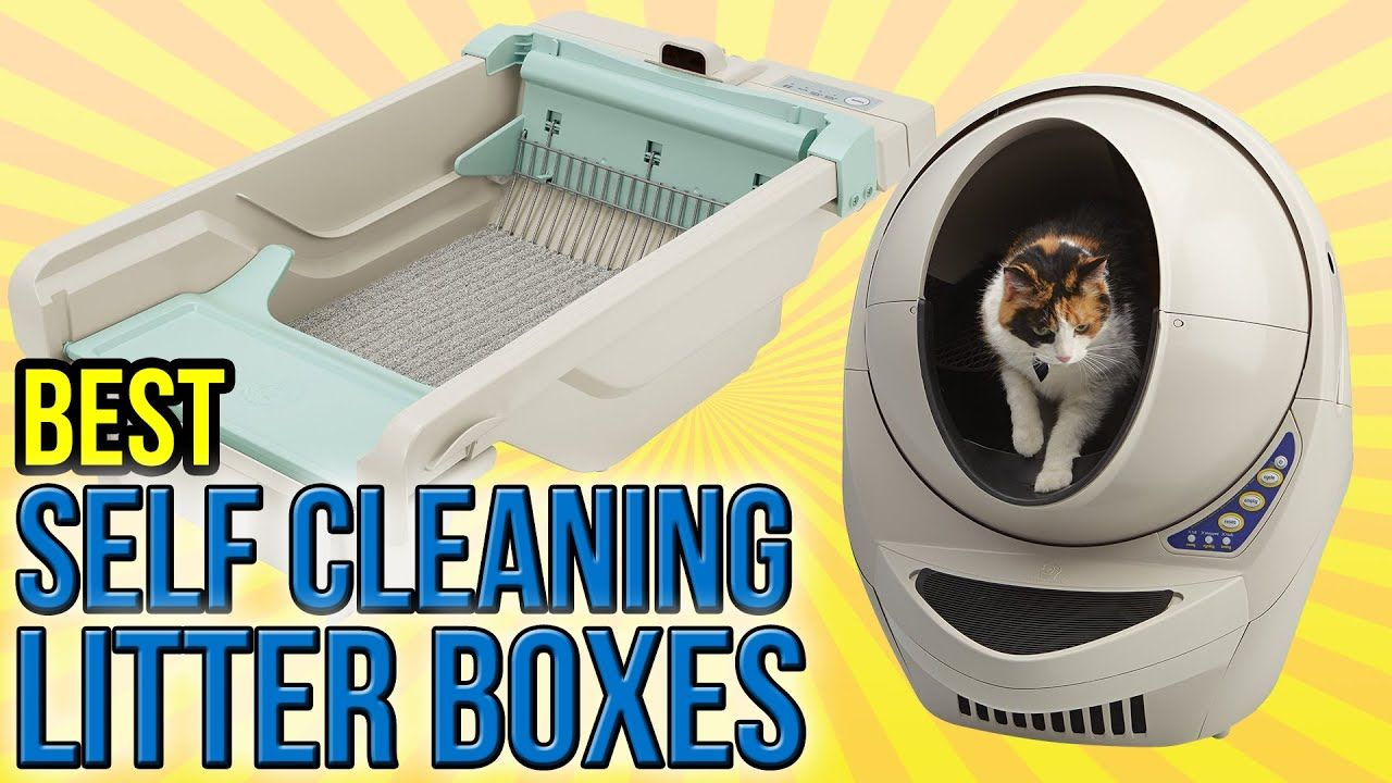 9 Best Self Cleaning Litter Box ReviewsBuyer Guide