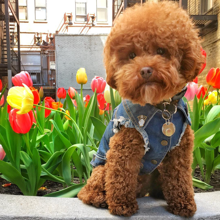 Daily Dose of Cute Pooch of NYC Page 2 of 2 Cute