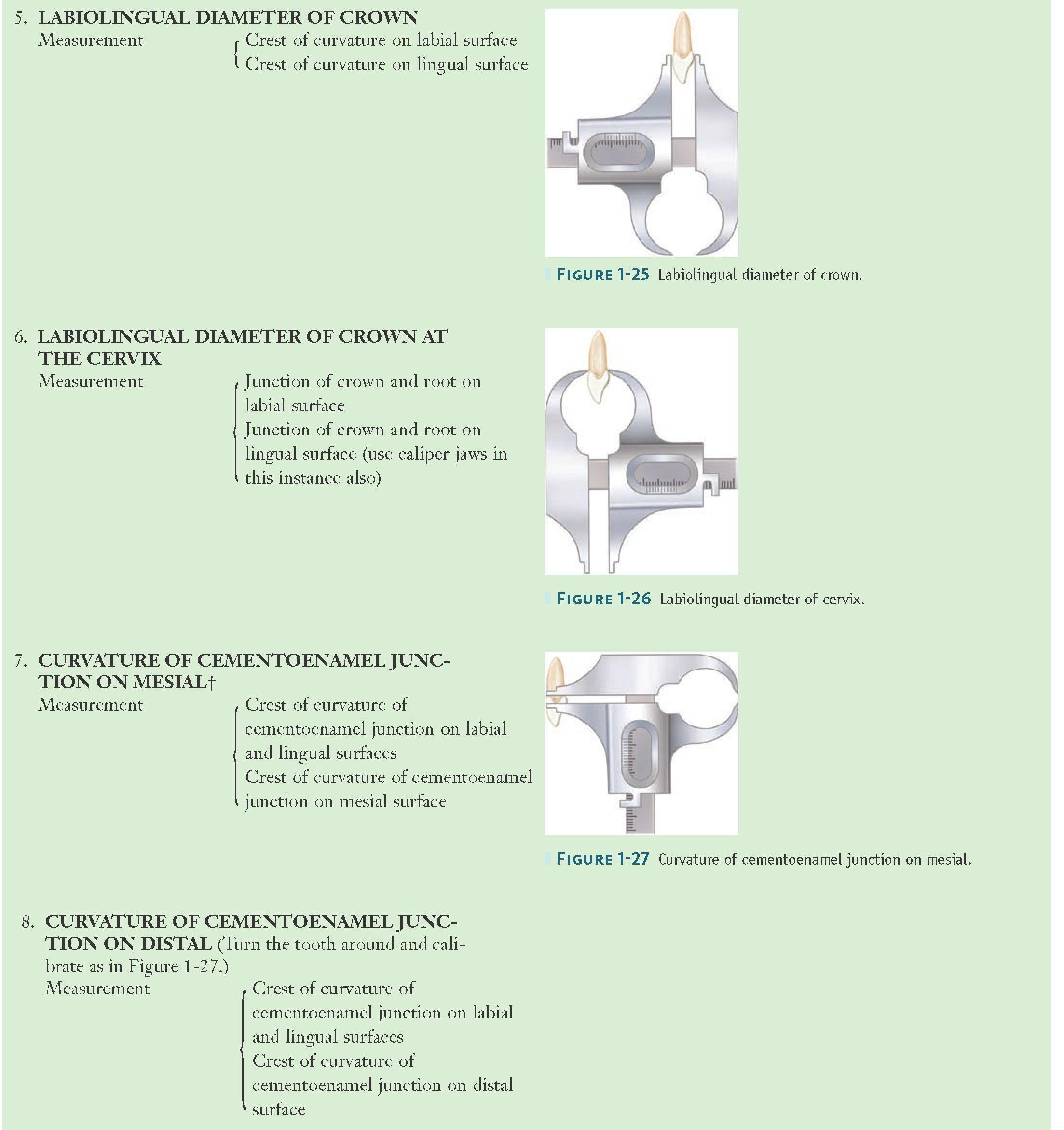 Method of Measuring an Anterior Tooth—cont\'d | encia | Pinterest ...