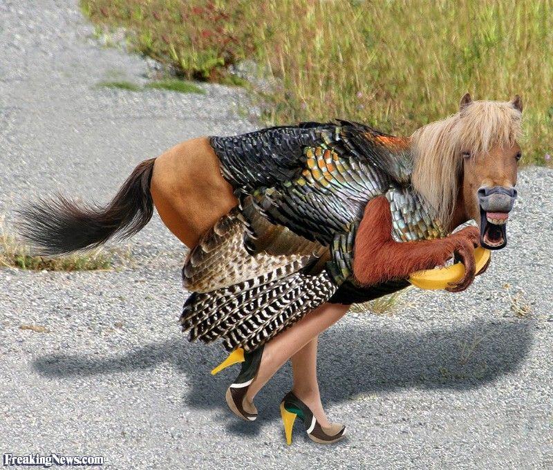 Funny Animal Mix Ups - Google Search   Funny Horses ...