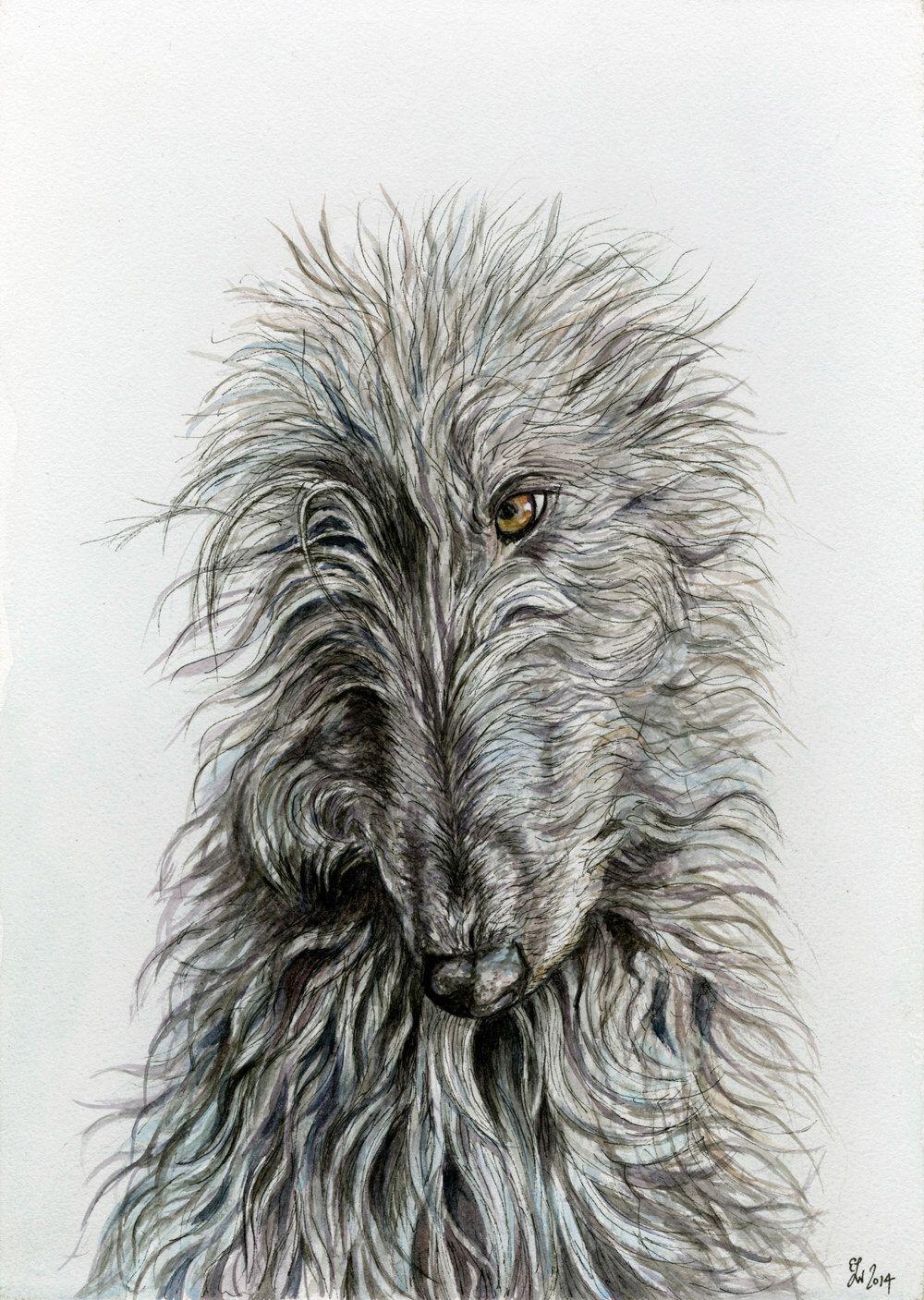 Deerhound Art Print by AlmostAnAngel66 on Etsy https://www.etsy.com/listing/254540392/deerhound-art-print
