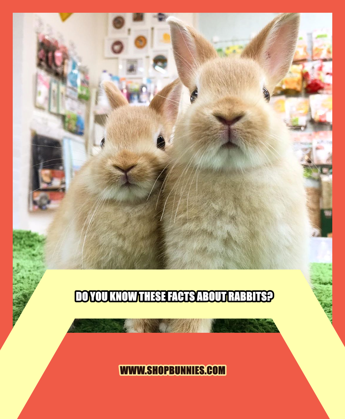 Do You Know These Facts About Rabbits In 2020 Rabbit Pet Bunny