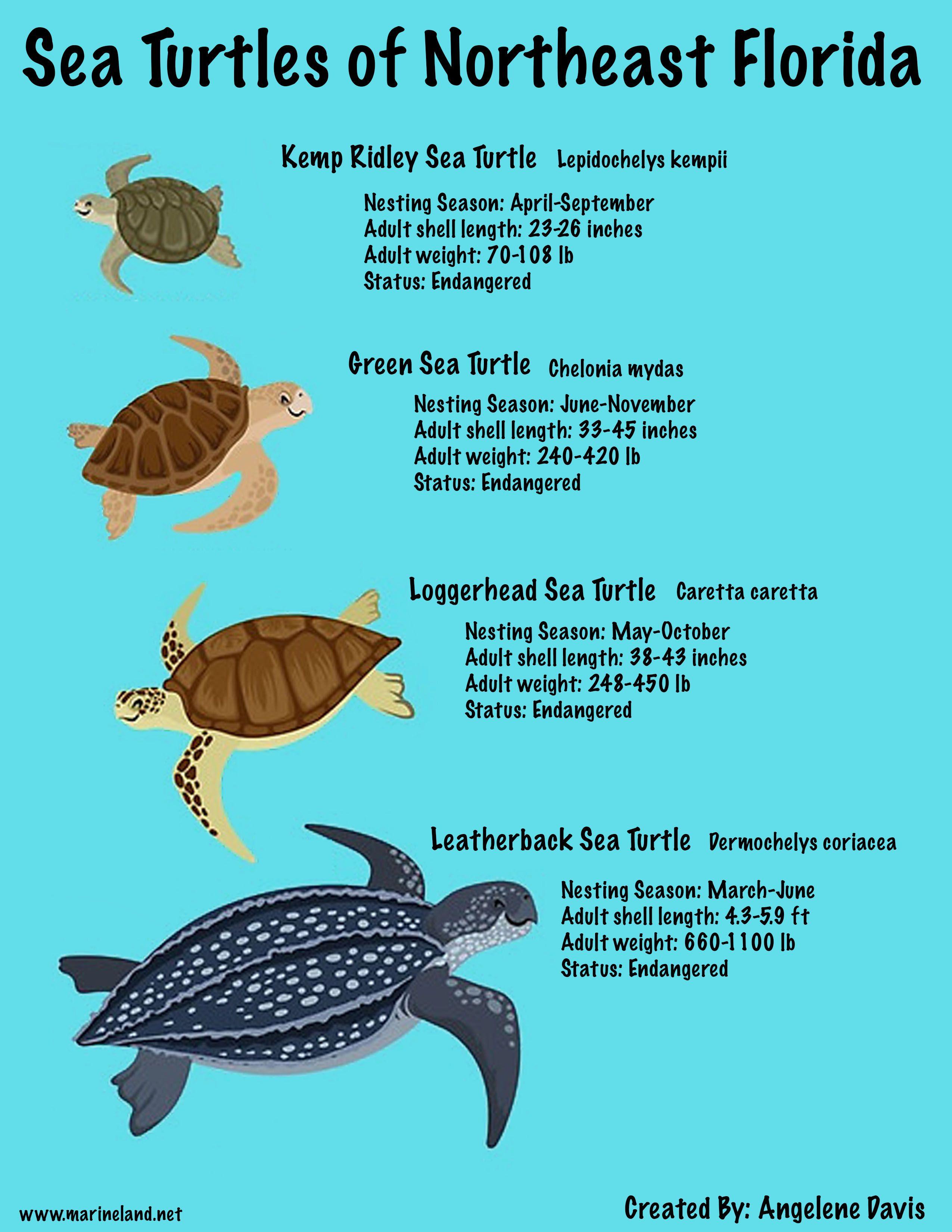 20++ Harmonious sea turtles worksheet Useful