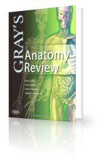 Gray S Anatomy Review 1st Edition Pdf Anatomy Pinterest