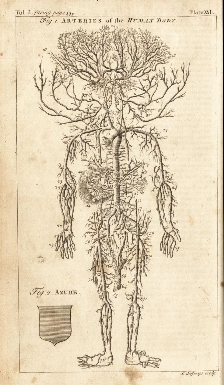 Fig. 1. Arteries of the human body. A new and complete dictionary of ...
