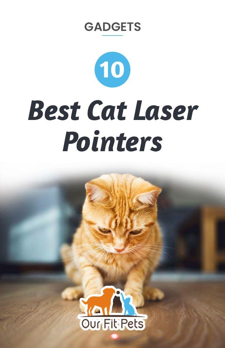 Best cat laser pointers top 10 cat laser cat laser