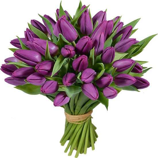 Bouquet De Tulipes Purple Prince Aquarelle Com Arrangement