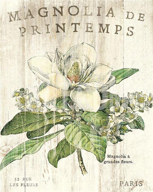 Magnolia de Printemps Art Print by Sue Schlabach at Art.com