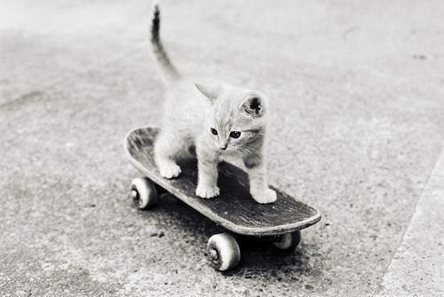 skate cat!