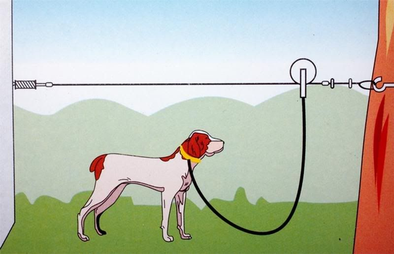 Dog Trolley Run Overhead Cable Dog Run Would Have To Find A Way
