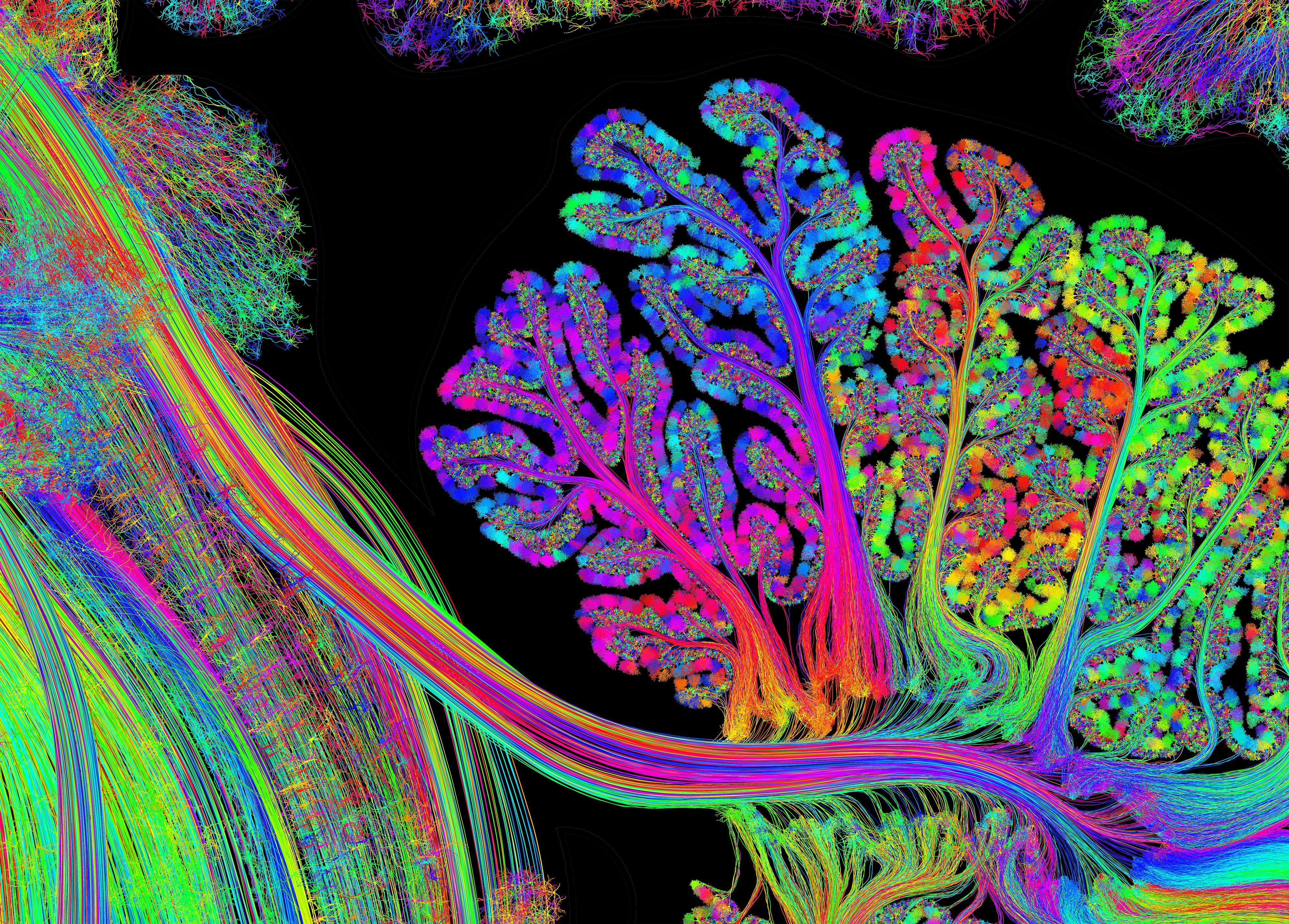 Cerebellum And Brainstem Plate Greg Dunn Brain Art Neural Art