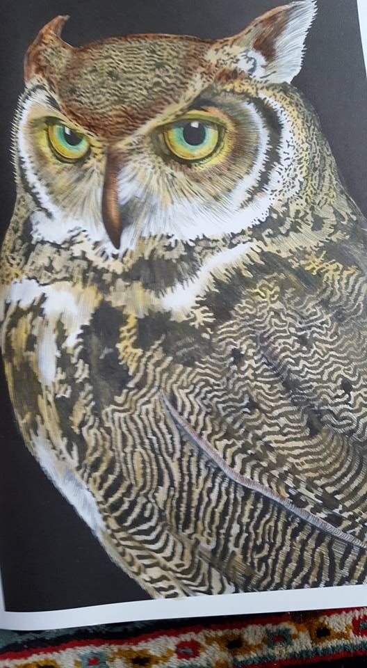 Great Horned Owl 1 By Susan Lowe