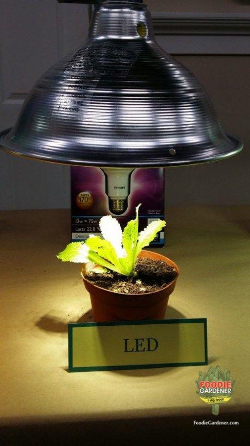 Grow Lights For Beginners Start Plants Indoors Grow 400 x 300