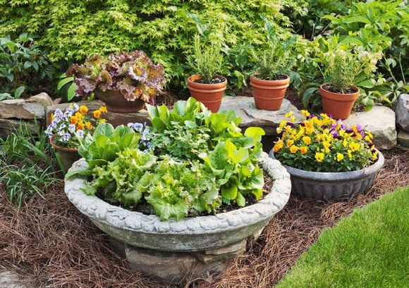 fall vegetable / herb garden in pots