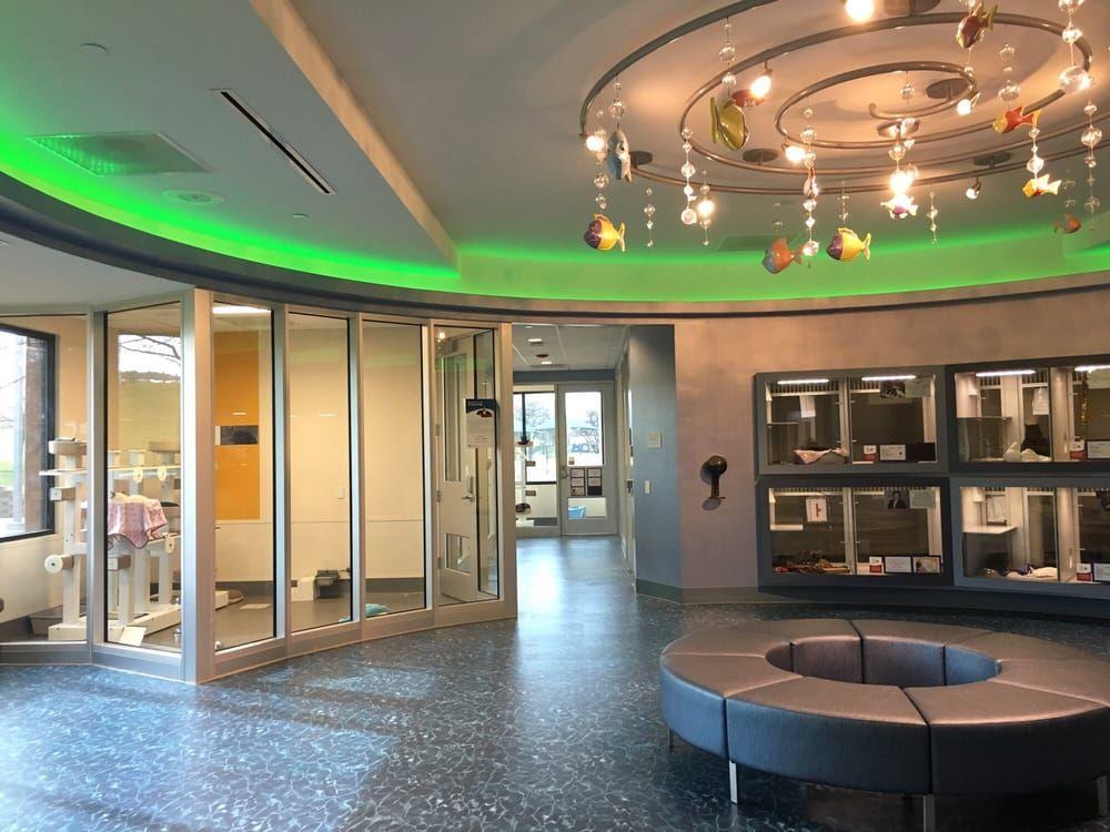 Photo Of Spca Of Texas Cat Room Dallas Tx Interior Design School Top Interior Design Firms Best Interior Design Websites