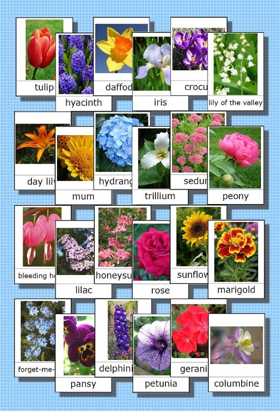 Printable Montessori 3part cards Flower Names by