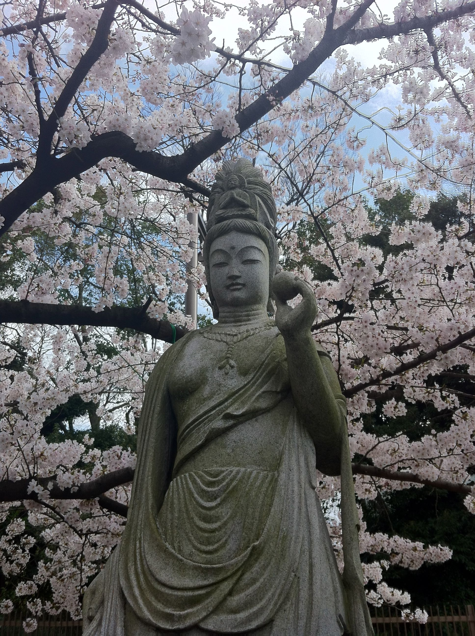 Image result for stone buddha, cherry blossoms