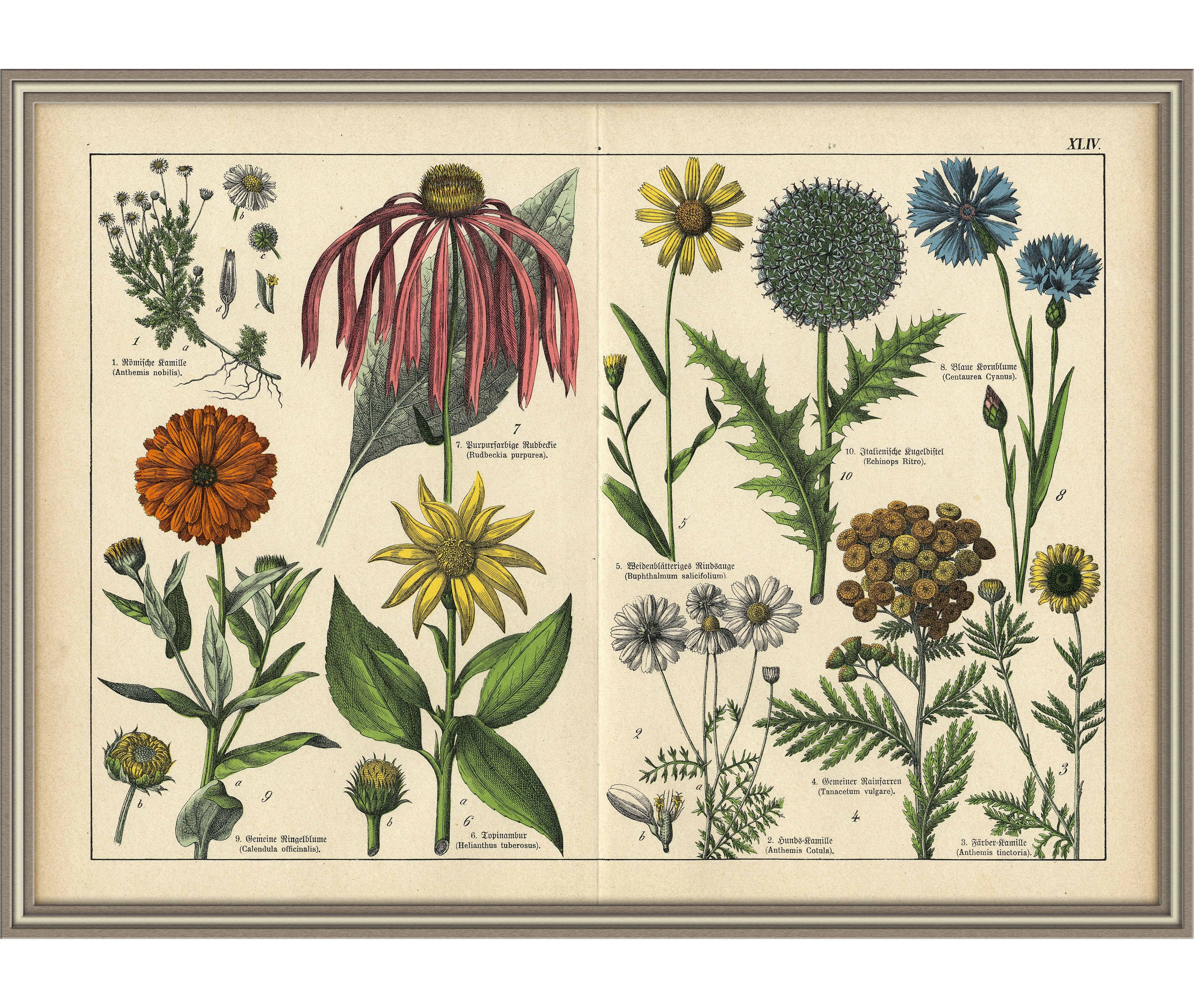From 1878 Colored lithograph print of FLOWERS