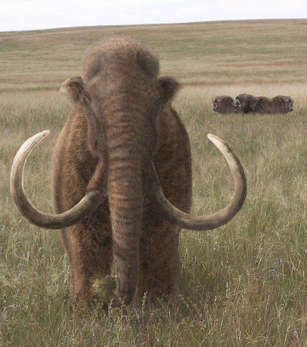 Last Mammoths Wrangel Island Ancient Animals Prehistoric Creatures Mammoth