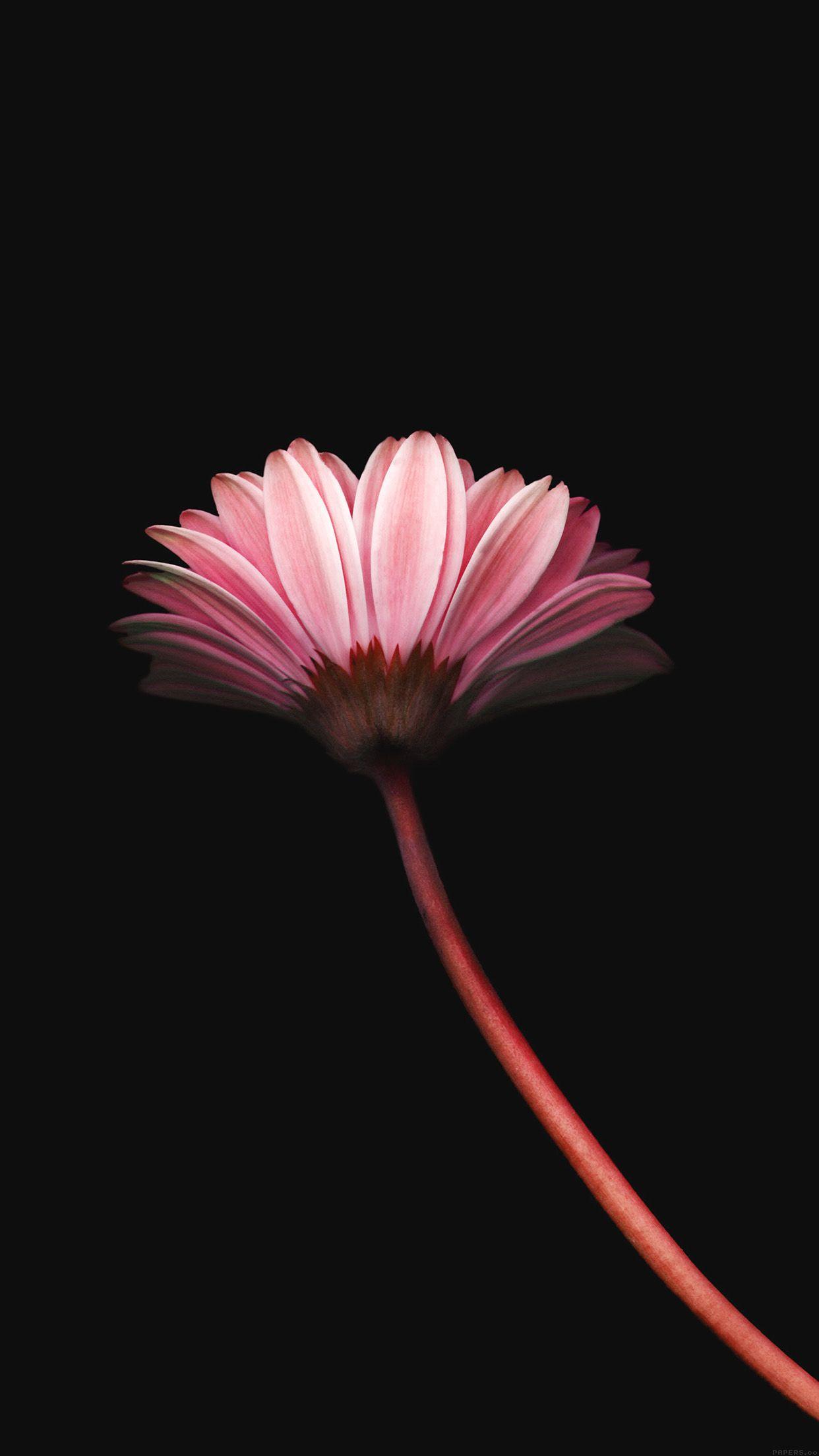 Lonely Flower Dark Red Minimal Iphone 6 Plus Cute Flower Wallpapers Iphone 6 Plus Wallpaper Black Wallpaper Iphone