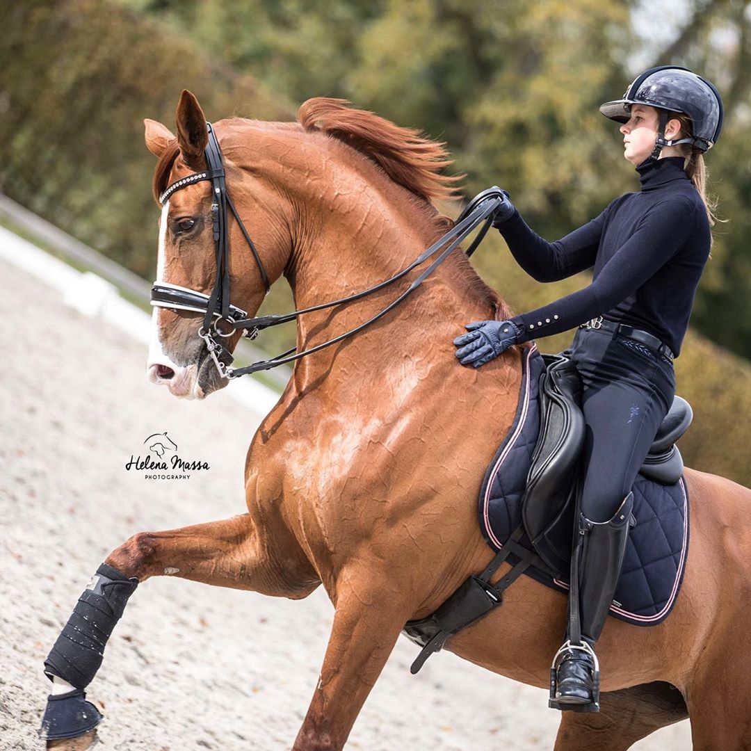 Pin On Horse Inspirations