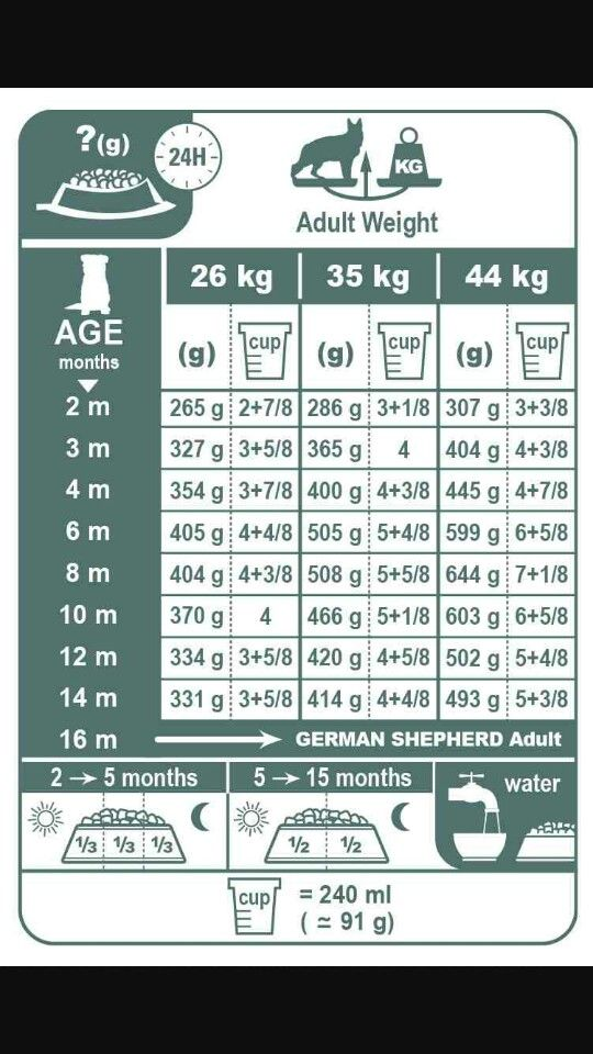 Gsd Food Amount Chart With Images German Shepherd Food German